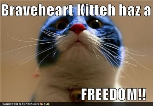 Braveheart cat